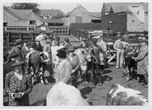 North Walsham Calf Club, on North Walsham Cattle Market, Yarmouth Road, North Walsham. Site of Roys Store. Photo R.E.R.Ling