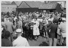 North Walsham Calf Club at the North Walsham Cattle Market, Yarmouth Road. Now the site of Roys Store. Photo R.E.R.Ling